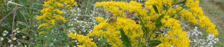 Warren County Ohio Beekeepers